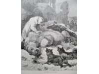 Une chasse à l'Ours blanc